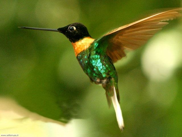 Hummingbird: il nuovo algoritmo di Google preciso e veloce