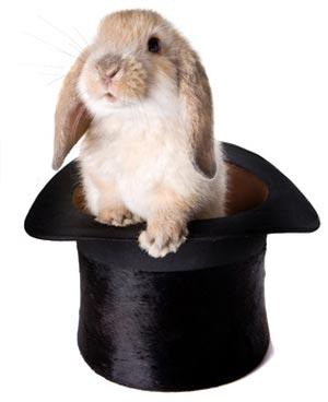 Coniglio magico