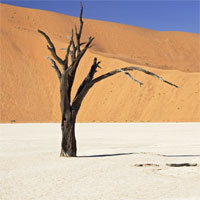 Deserto su Google+