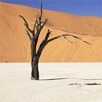 Deserto su Google+