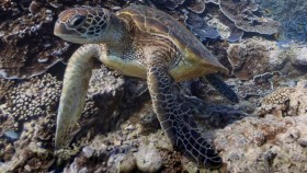 La barriera corallina su Google Street View